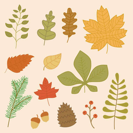 Autumn leaves collection.Vector illustration of autumn leaf collection with flat design.