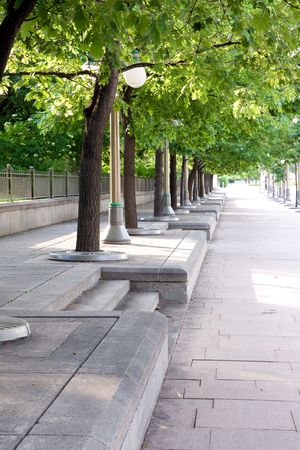 Row of trees on street in Ottawa Banco de Imagens