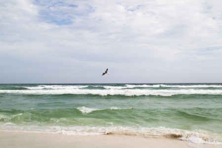 Emerald Beach in Sandestin Florida with a lonely bird in flight