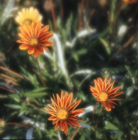 Nice flowers in the garden of the neighbor Stock Photo