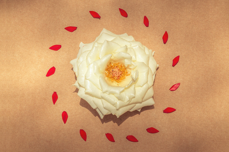 White rose surrounded by red petals in the center. Template with flowers to make cards.
