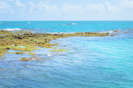 Rocks and corals in the sea of Joao Pessoa PB, Brazil.
