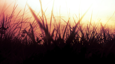 Beautiful dusk background on nature with some blurred and silhouette of grass at a colorful sunset.