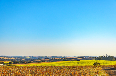 Agricultural scene: Landscape of a farm, corn plantation on bottom and a beautiful clear blue sky with enough space for text.
