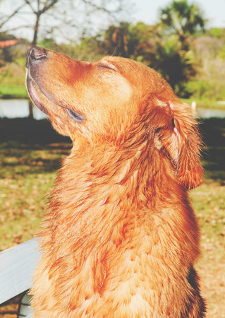 Dog with the head up breathing the pure air of nature with eyes closed, good feeling expression, feeling of freedom.