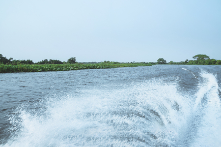 Water trail made by a motor of a boat on the waters of a river in Pantanal, Brazil and the green vegetation on background. Stock Photo