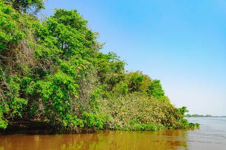 Landscape with the river and green vegetation of trees and plants on the river banks. Beautiful clear blue sky and the water of the river. Photo taken in  Pantanal, Brazil. Stock Photo
