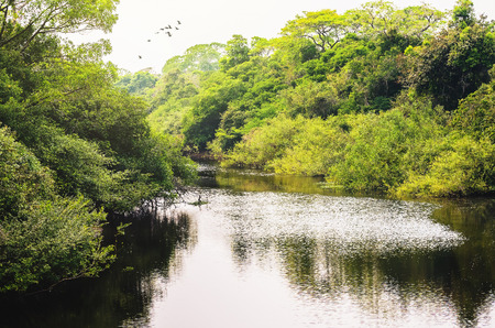Landscape of a river surrounded by forest of green vegetation, trees and plants on the river banks. Photo taken in Pantanal, Brazil. Stock Photo