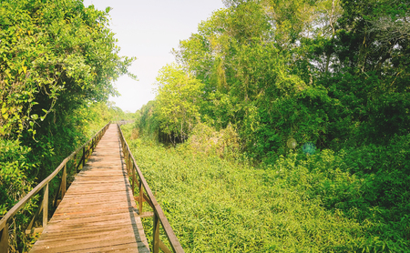 Suspended walkway made of boards of wood surrounded by nature of Pantanal in Brazil.