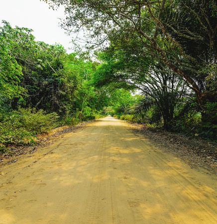 Dirt road surrounded by the forest known as Estrada Parque do Pantanal. Road visited by tourists that want a direct contact to the nature. Stock Photo