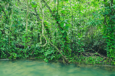 Forest on the margim of the Formoso river in Bonito - MS, Brazil. Trees, plants, natural forest and the transparent green water of the river.