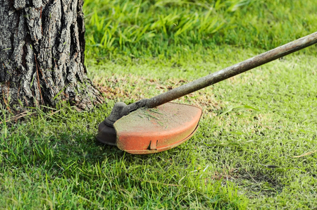 Trimming the grass near a tree trunk. Focus on the grass trimmer. Stock Photo