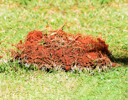 Piece of grass ripped from the ground. Grass facing up to the exposed roots and land around.  Stock Photo