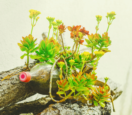 Green plant and flowers growing on a reused soda bottle. Pet bottle used as a vase for a plant. Foto de archivo