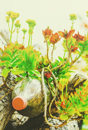 Green plant and flowers growing on a reused soda bottle. Pet bottle used as a vase for a plant. Stock Photo