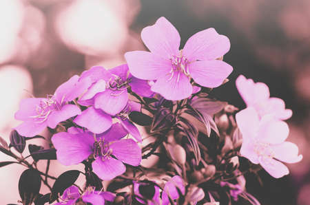 Pink flowers background. Depth of field.