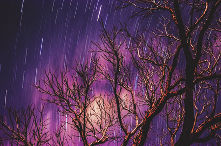 Stars traces on a long exposure photo of the sky at night and a soft blurred tree branches silhouette on foreground. Purple tones sky.