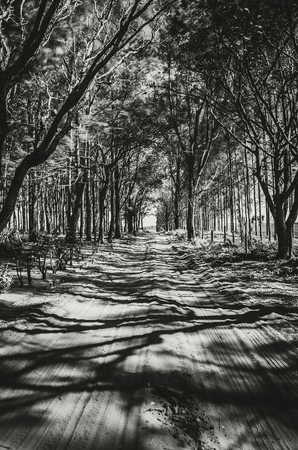 Unpaved farm road surrounded by trees. Dirt road. Shadow of the trees on the road. Black and white photo.