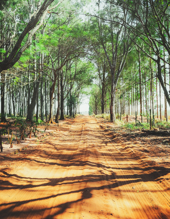 Unpaved farm road surrounded by trees. Dirt road. Shadow of the trees on the road.