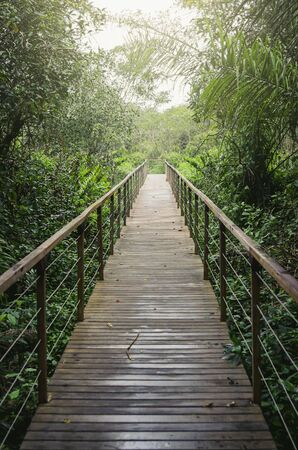 Wooden footpath in the middle of the forest. Straight footpath surrounded by trees and plants at Bonito MS, Brazil. Brazilian ecotourism.