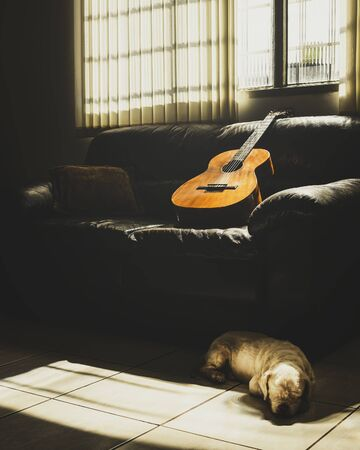 Old acoustic guitar leaning on the sofa at home illuminated by the sun light through the window and a dog lying on the floor. Home scene, music background.