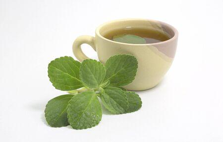 Boldo tea. Natural and medicinal tea. Fresh green plant. Boldo leaf inside the beverage.