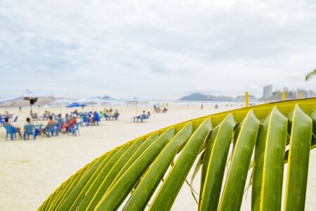 View of a palm tree leaf and the beach on unfocused on background. Photo taken at Enseada beach, Guaruja SP Brazil. 版權商用圖片