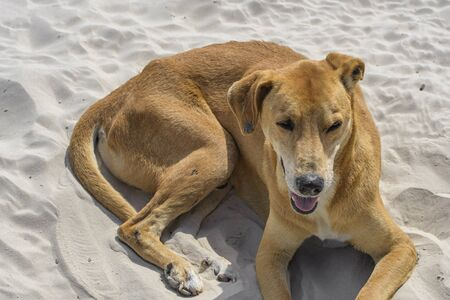 Stray dog relaxing on the sand of a beach on a sunny day.