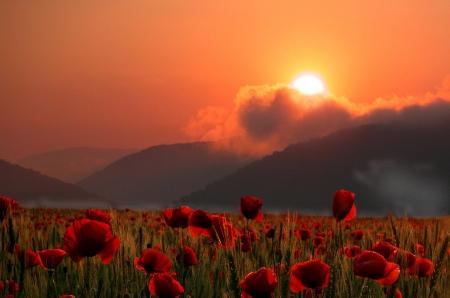 Été coquelicots champ au coucher du soleil photo