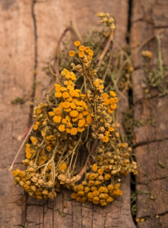 depressant: Dried tansy branches on a wooden background Stock Photo