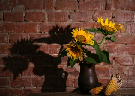Still life with sunflowers and dry harvested corn on a brick wall Stock Photo - 19367933