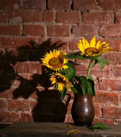 Still life with sunflowers on a brick wall photo