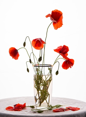 Bunch of poppies in vase on a white background  免版税图像