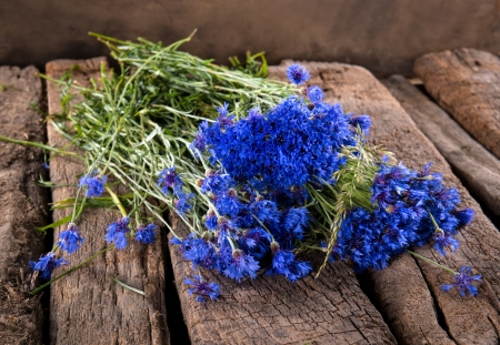Blue cornflowers on a wooden background photo