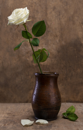 White rose in a vase on a wooden background photo