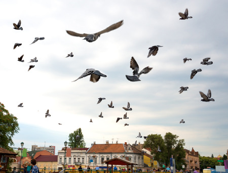 Flight flock of pigeons against the sky  Cityscape