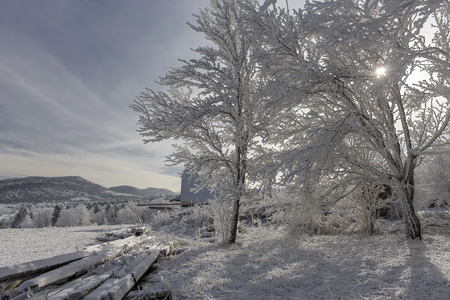 Beautiful winter landscape with snow covered trees in the\ Carpathian mountains
