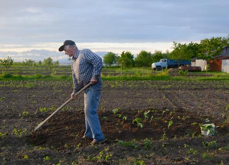hoeing: Farmer hoeing vegetable garden in springtime