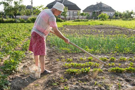 hoeing: Poor farmer hoeing vegetable garden in springtime Stock Photo