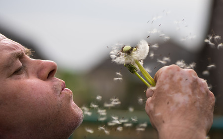 blowing dandelion: Closeup of senior man blowing dandelion in the park