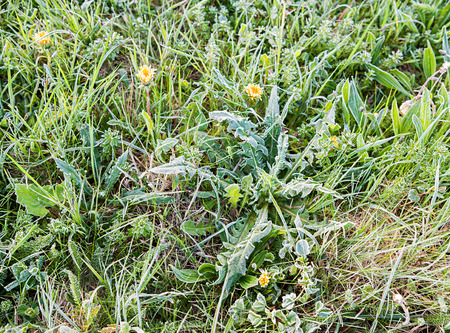 is covered: Green grass covered with frost