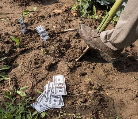 cash crop: Farmer planting money in the field Stock Photo
