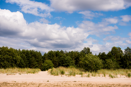 Baltic sea shore in Latvia. Sand dunes with pine trees and clouds. Typical Baltic beach landscape 免版税图像