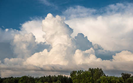 Sky background with clouds and treetops Standard-Bild