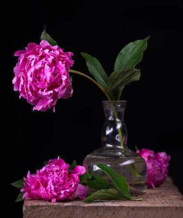 Bodegón artístico con peonías rosas en florero sobre un fondo oscuro