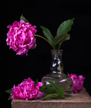 Natura morta artistica con peonie rosa in vaso su sfondo scuro