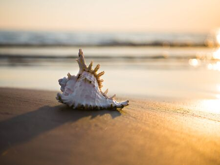 Natural background with seashell on the sandy beach at sunset 版權商用圖片