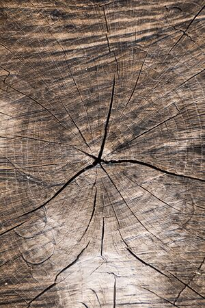 Close up of sawn off logs exposing cross-section with cracks. Wood texture or background