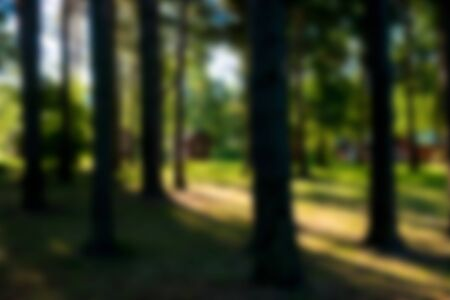 Abstract nature background. Image of trees in summer forest. Intentional motion blur