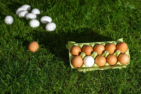 Fresh chicken eggs on grass and in a paper box on a background of green grass